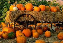 Open Any Time For Schools Churches Scouts Homeschools Or Other Groups Call To Arrange Your Visit Also Having A Fall Fest On Sunday October 28 From