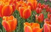 ดอกไม้สวยสุขภาพจิตสดใส