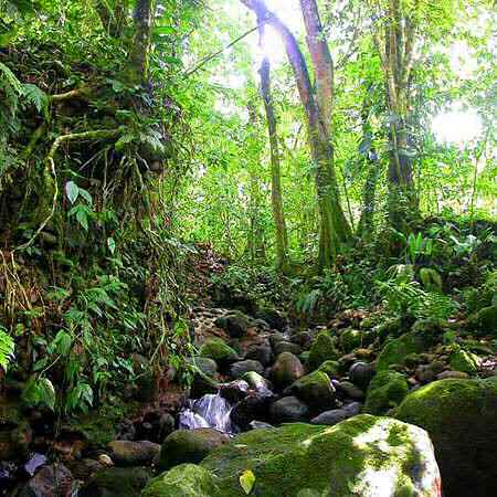 Tropical rainforest trees for kids