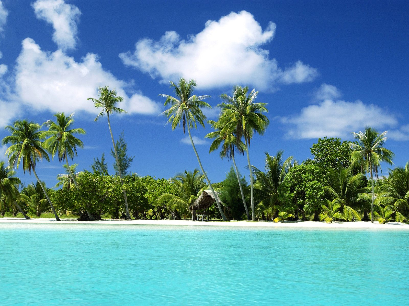 http://1.bp.blogspot.com/-F2xhybayxzU/UHZ8dnqPJVI/AAAAAAAAIks/fRS0qkcrEsQ/s1600/beach-wallpaper-hd-31.jpg