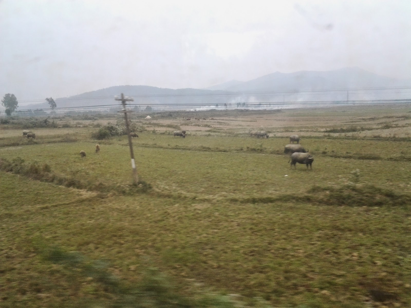 Vietnam Holiday train scenery: buffaloes