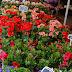 Les fleurs de Paris