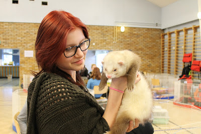 frettinäyttely+wcwfs+ferret+show