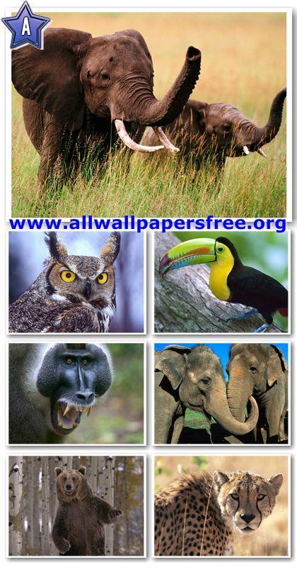 60 Amazing Animals Wallpapers 1280 X 1024 [Set 28]
