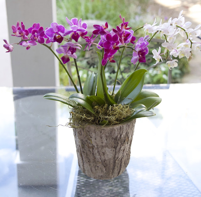 Rainbow Orchid; How to Landscape an Orchid; Nora's Nest