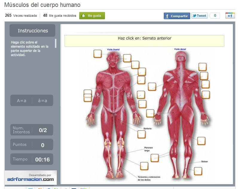 PROPUESTAS INNOVADORAS DOCENTES.: ACTIVIDAD 2: Músculos del cuerpo ...
