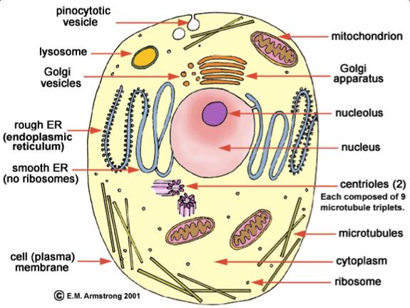 A Level Biology 232 Distinguish Between Eukaryotic And