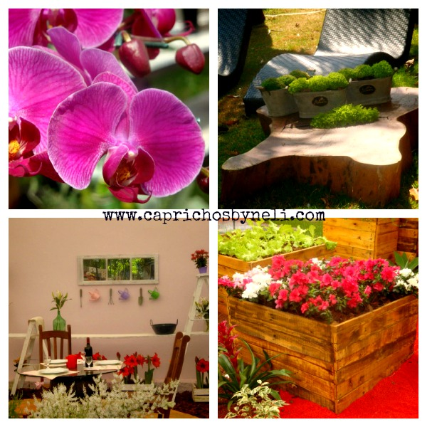 Expo flora 2012, Holambra