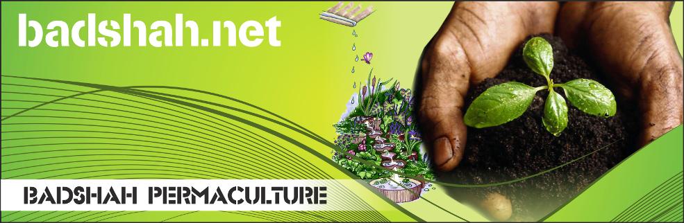 badshah.net Permaculture