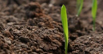 Piante E Fiori La Lavorazione Del Terreno E La Semina