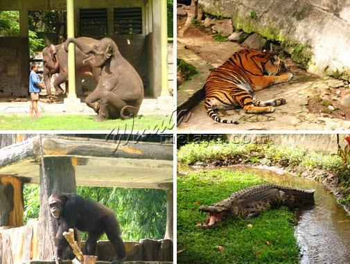 Zoo in Yogyakarta