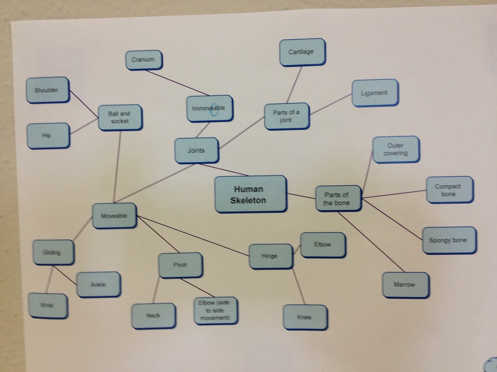 Bits And Pieces Of Middle School Skeletal System Concept Maps