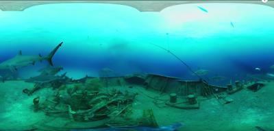 imagen de tiburones a través de unas cardboards
