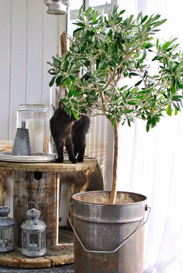 olivträd kattunge kabeltrumma