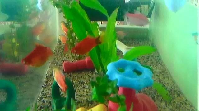 www.ae-sys.com/bloggy/fish4enviropeel.mp4