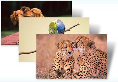 hayvan sevgisi, hayvan teması, hayvan resimleri,