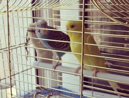 minik kuşlarım