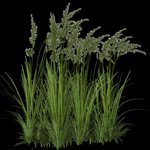 Png jardinagem arbusto rvore grama folhagem for Vegetacion ornamental