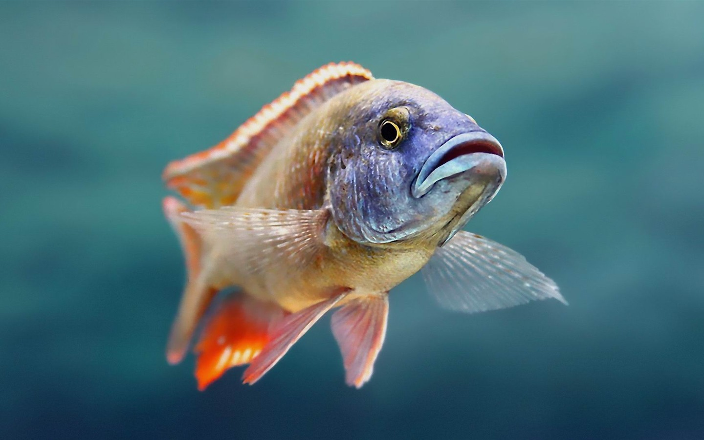 Discover mass of funny facebook status and funny jokes for Are fish animals