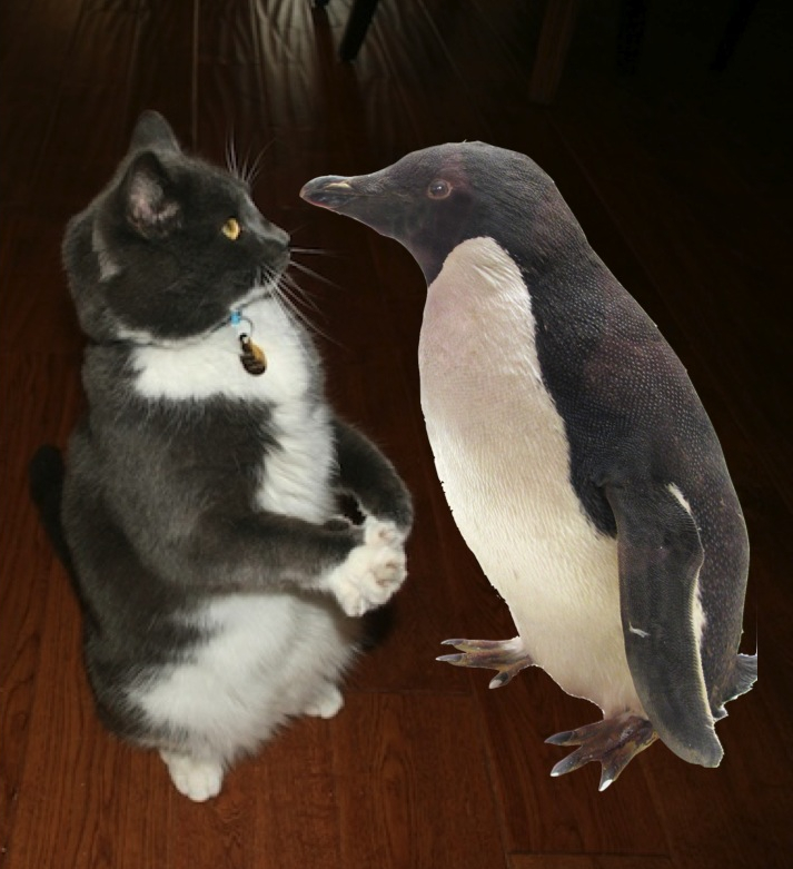 Riley the Cat and His Penguin from Light Bulbs and Laughter