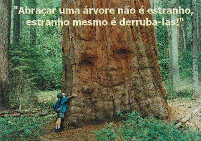 """""""Abraçar uma árvore não é estranho,  estranho mesmo é derruba-las!"""""""