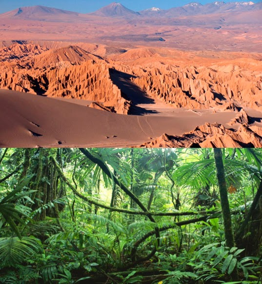 Image result for rainforest vs desert