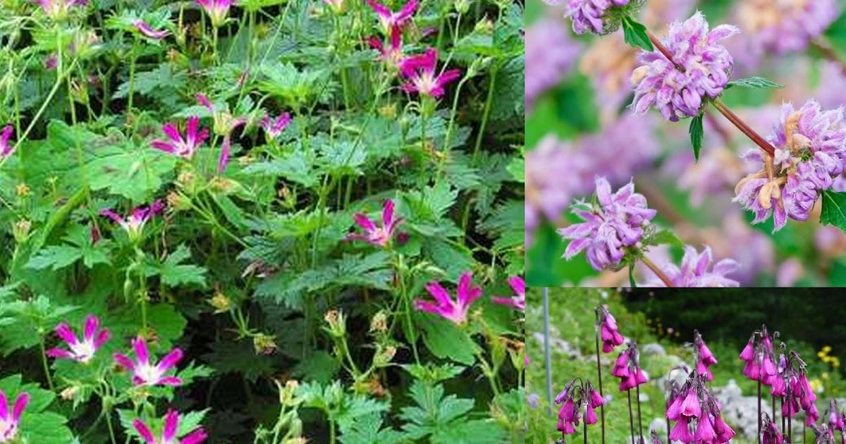 Derri re les murs de mon jardin commande au clos d armoise - Derriere les murs de mon jardin ...
