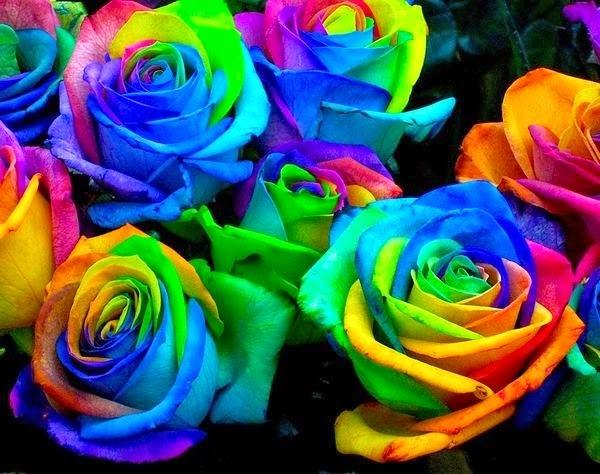 Imagenes De Rosas Blancas Y Azules - fotos de rosas blancas para descargar Mundo Imágenes