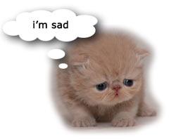 sad_kitten.jpg