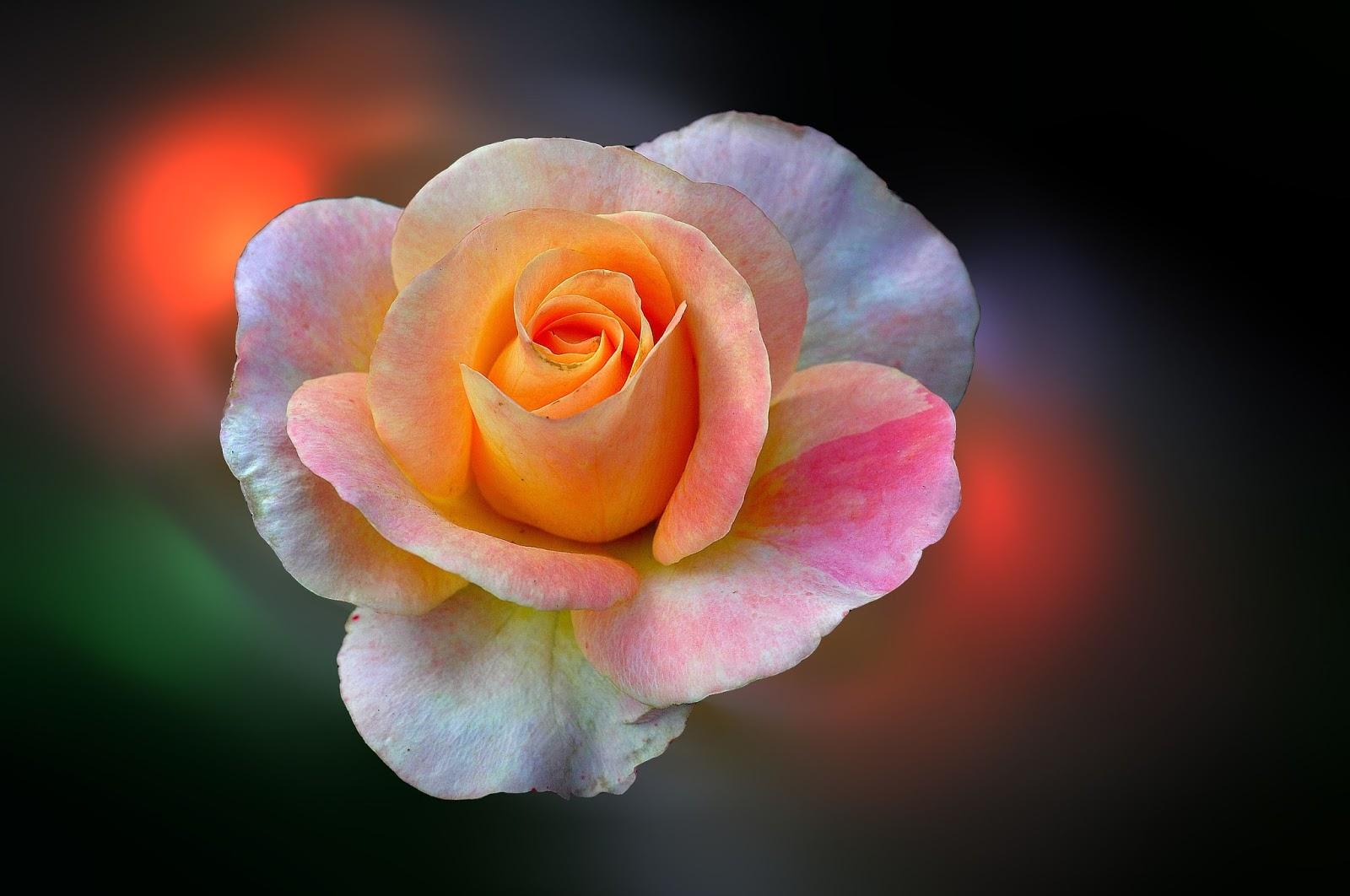 Fotos De Flores Alta Resolucion - Descarga foto gratis de flores de colores en alta resolución