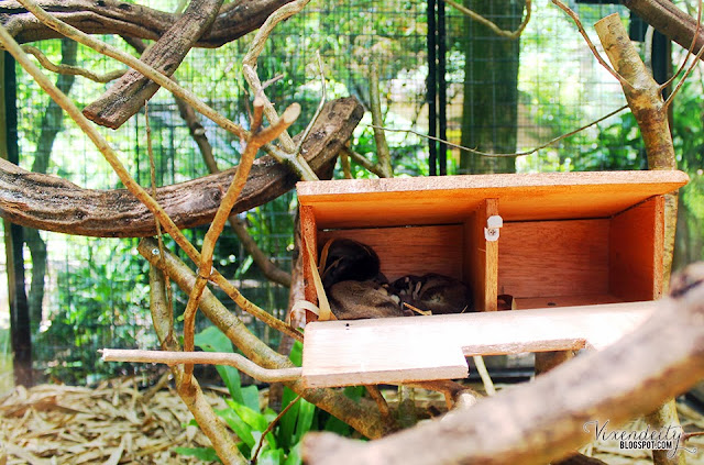 Sugar glider Lost World Tambun Petting Zoo