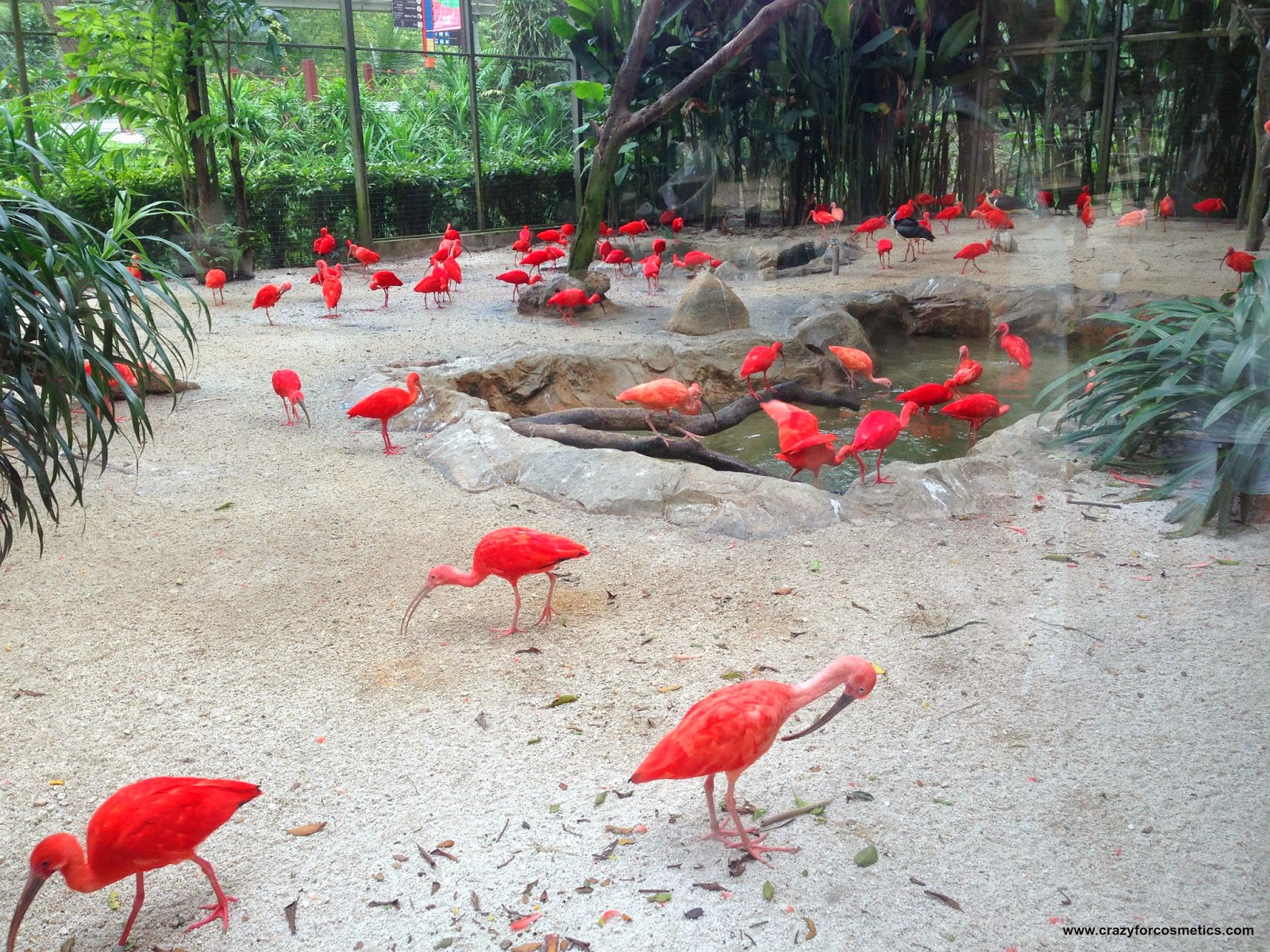 Jurong Bird Park- Jurong Bird Park tickets- jurong bird park timings- jurong bird park review- jurong bird park in Singapore- jurong bird park nearest mrt- jurong bird park shows- Travel- Singapore