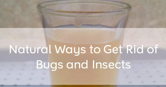 Doug Semple How To Get Rid Of Toxic Belly Bugs