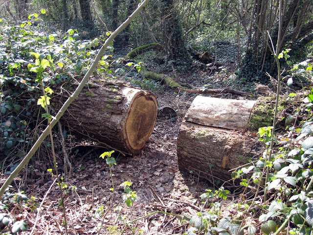 A split treetrunk in Sparrow Wood.