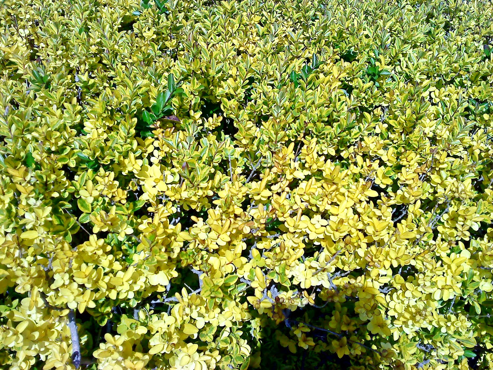 Egresados medicina tijuana - Clases de flores amarillas ...