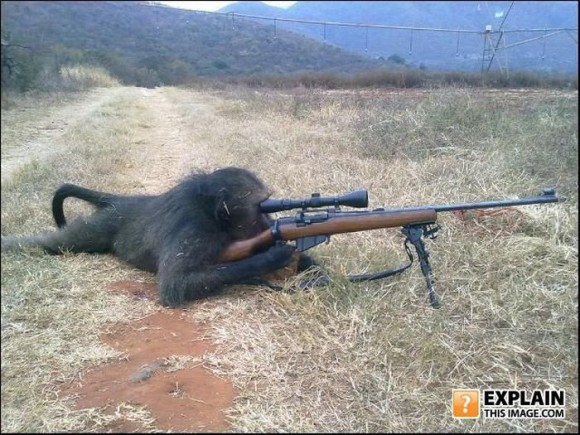 Monkey Shooting Gun
