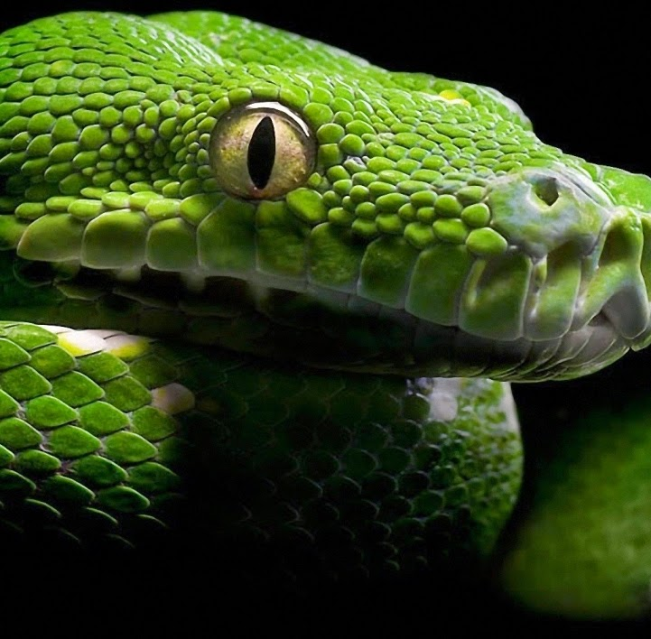 2015 March Chinese Horoscope for Snake