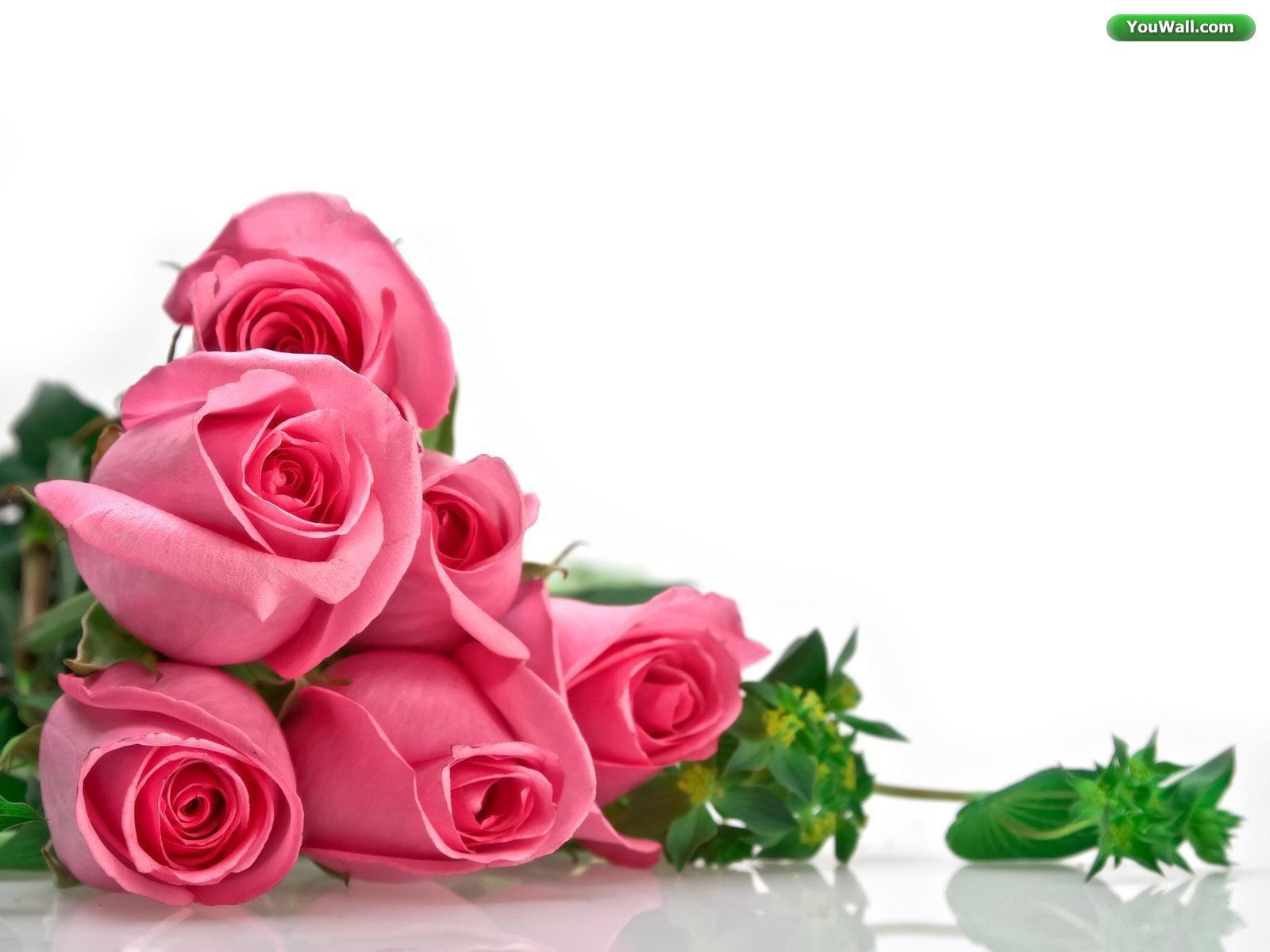 Wedding Flowers Red Rose White Rose Wallpaper For Desktop Backgrounds