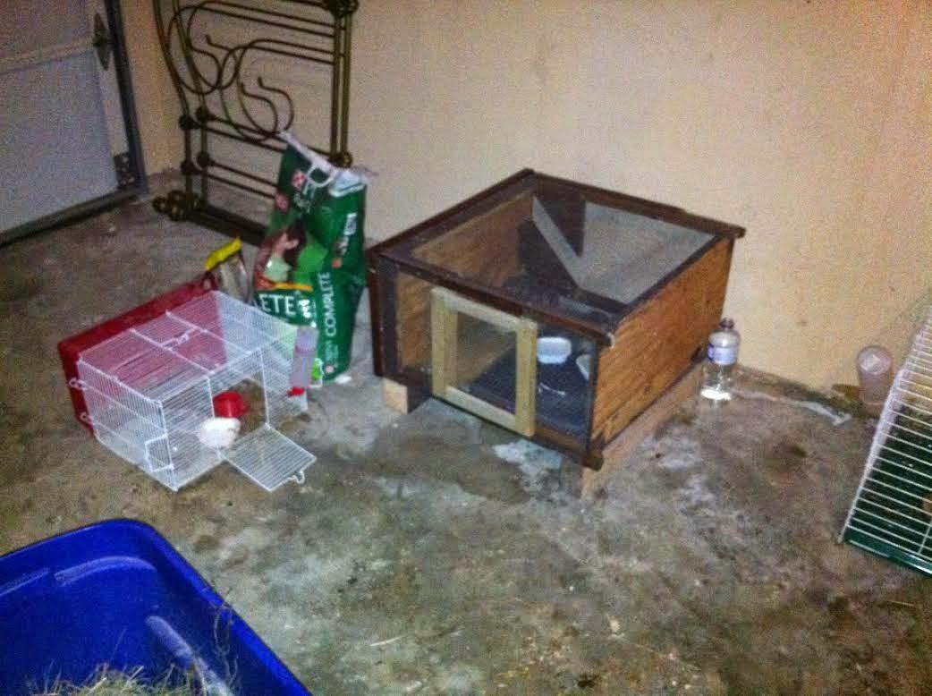 Diy quail house
