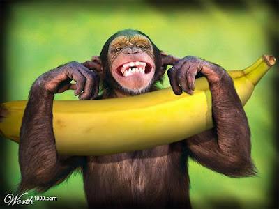 Brasil: De Império a terra de macacos (Um alerta para o mundo). by Gladio  Banana-macaco