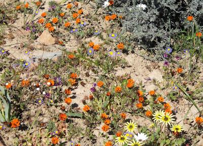 flower diversity in western Australia