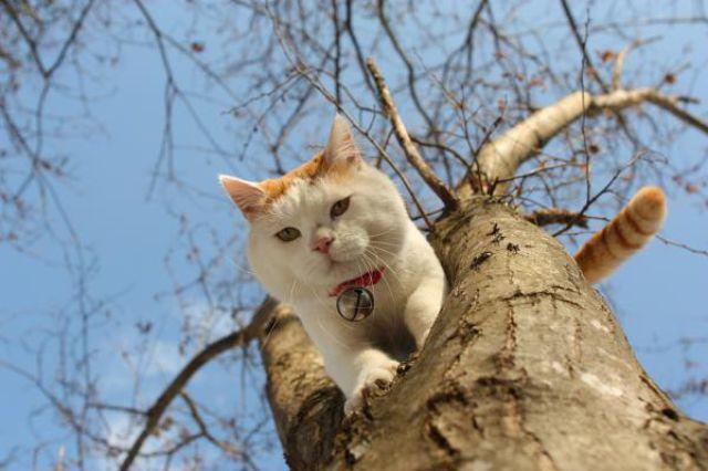 Kucing Lucu Narsis Unyu Yang Bergaya Seperti Model
