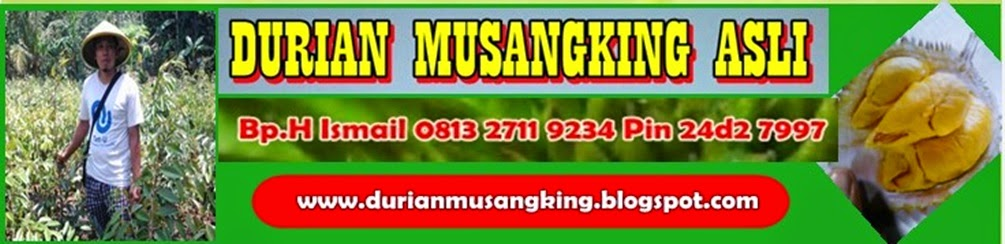 Bibit Durian Musang King, Budidaya Durian Musang King, Jual Bibit Durian Musang King