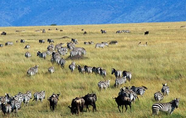 Pengertian Ekosistem Terestrial dan Jenisnya
