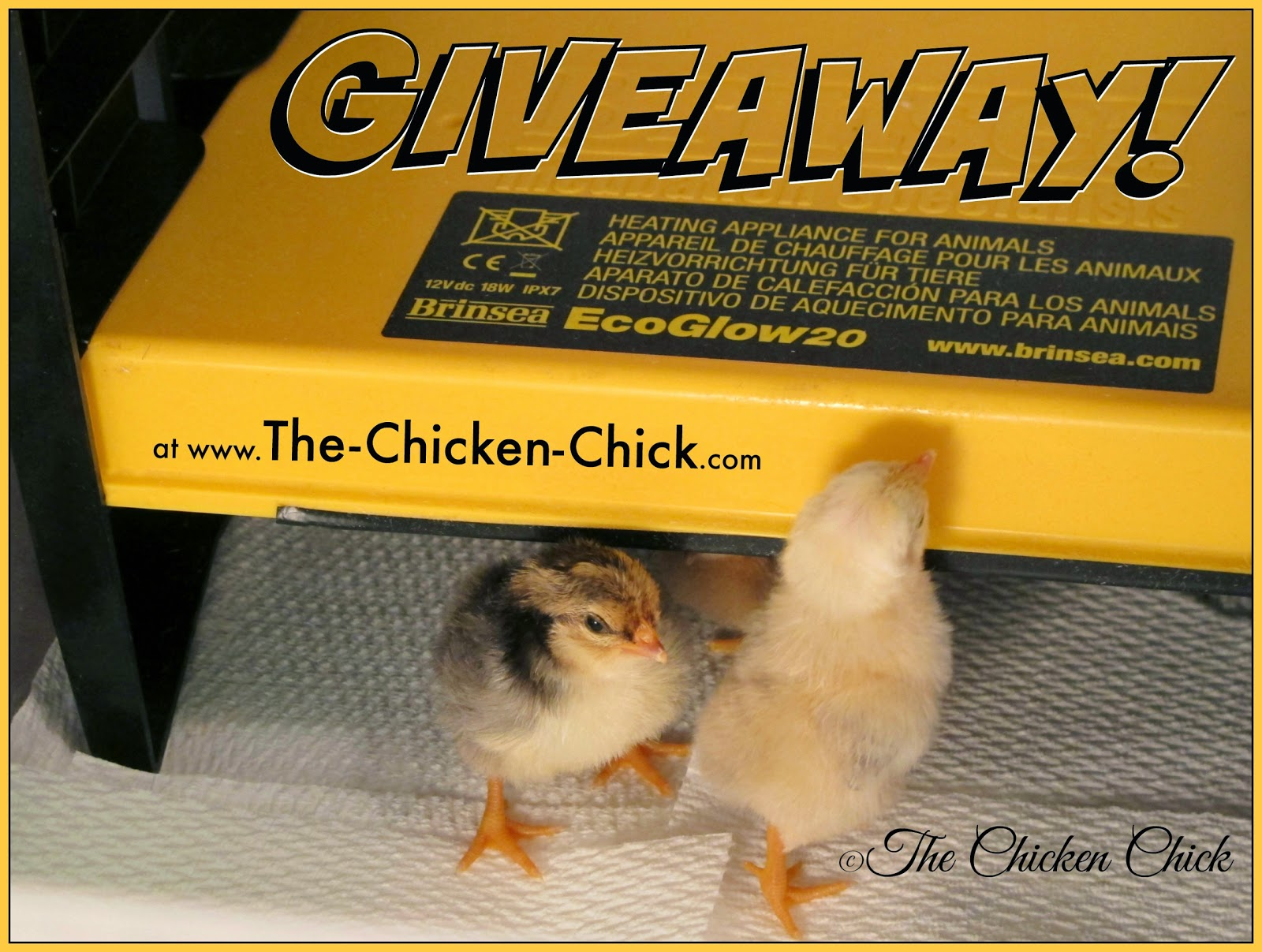 The Chicken Chick 174 Flock Focus Friday 10 24 14 Featuring