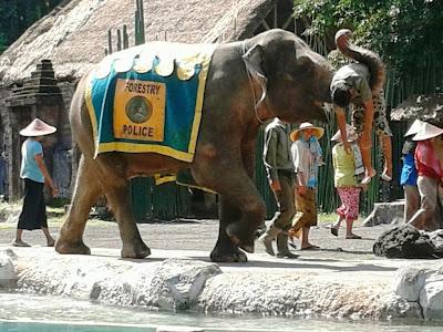 Evakuasi yang dilakukan oleh gajah