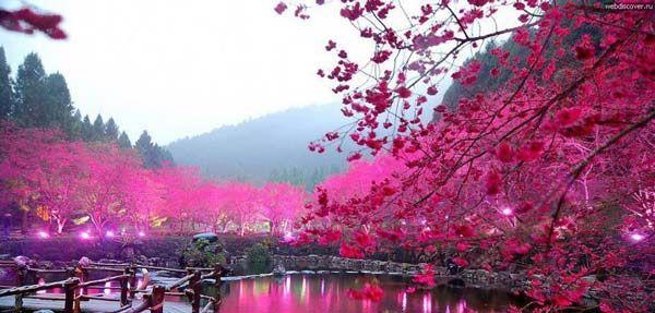 Λίμνη με τις κερασιές. kαταπληκτικές