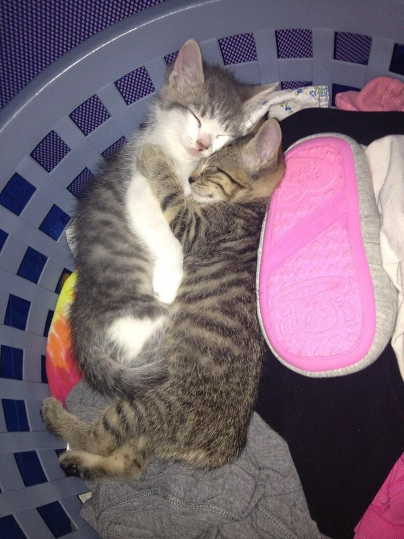 cat pictures, cat photos, sleeping kitten