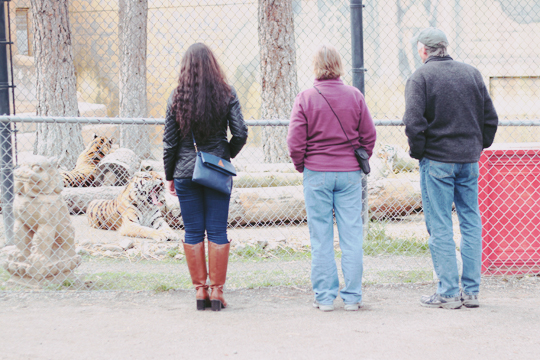 Cat tales zoological park Spokane WA