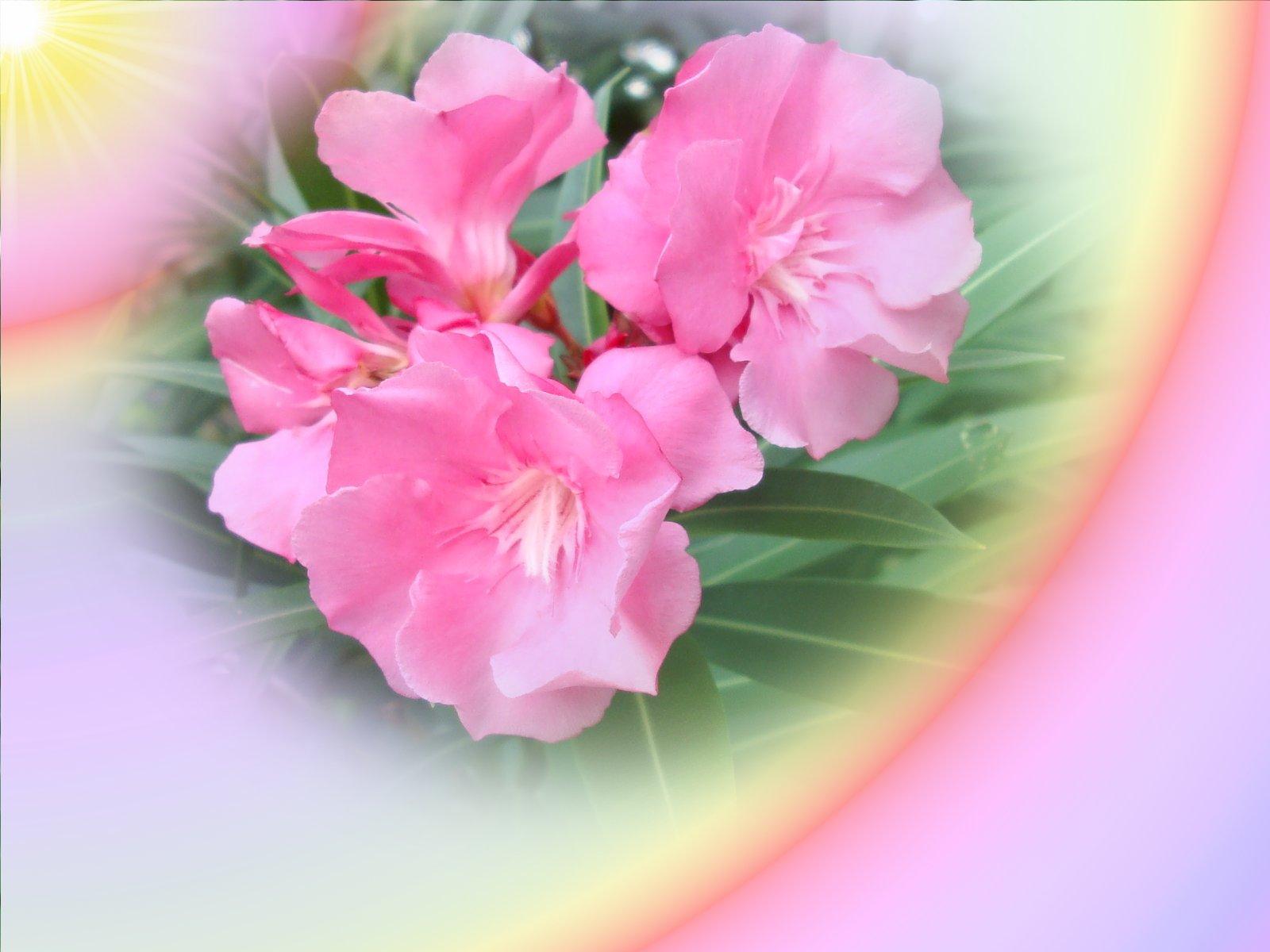 http://1.bp.blogspot.com/-FAFVHd09TNA/T4T4lbYxIKI/AAAAAAAAAXA/1XTX6Q4NdQQ/s1600/Spring%20Flowers_2.jpg